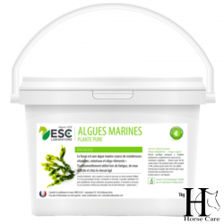algues marines vitamines et minéraux chevaux horsecarephyto.fr