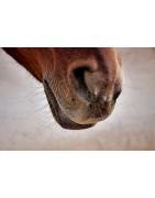 respiration et toux cheval