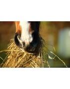 phytothérapie pour la digestion du cheval