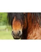 produits naturels pour la peau du cheval et pour éloigner les insectes