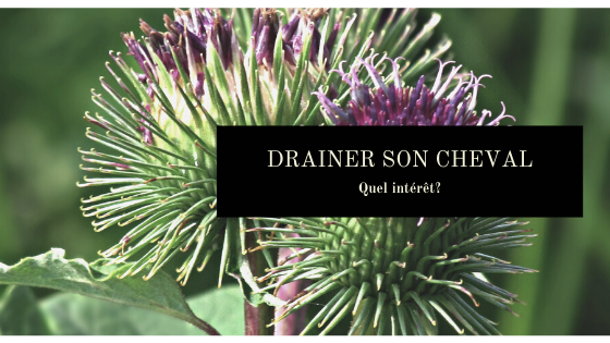 drainer son cheval